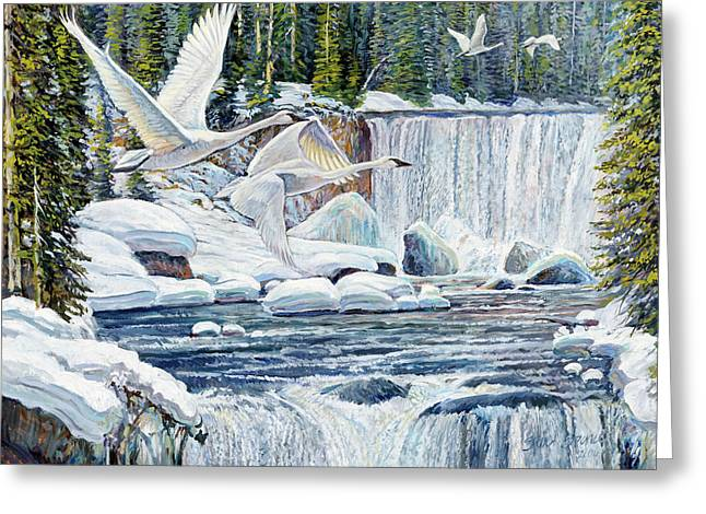 Swans Over Collonade Falls Greeting Card by Steve Spencer