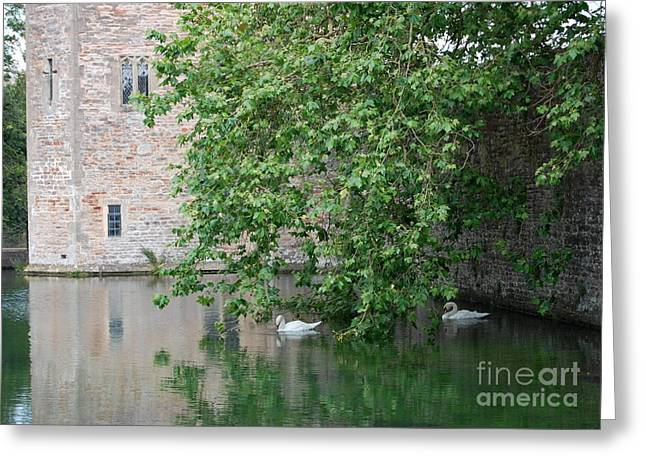 Swans Under The Palace Walls Greeting Card by Linda Prewer