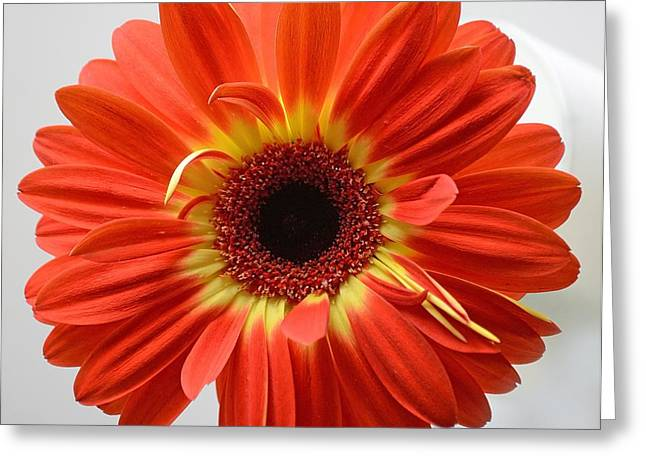 Greeting Card featuring the photograph Sweet And Simple by Melanie Moraga
