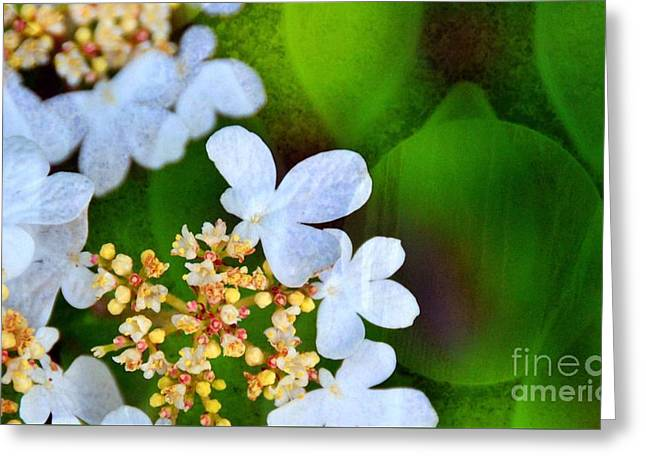 Greeting Card featuring the photograph Sweet And Sour by Darla Wood