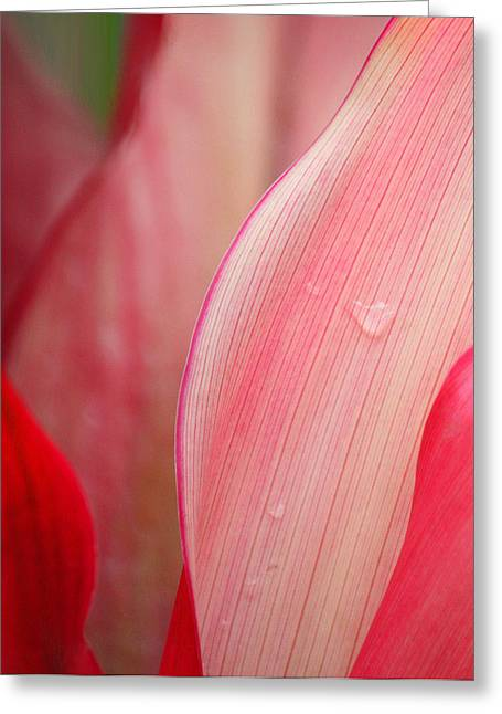 Greeting Card featuring the photograph Sweet Angel's Tear by The Art Of Marilyn Ridoutt-Greene