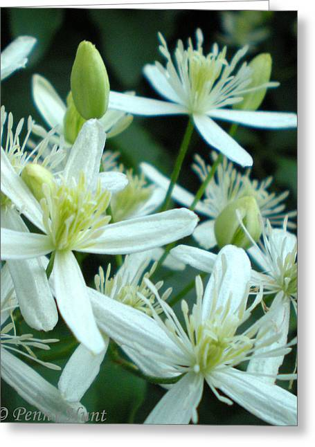 Greeting Card featuring the photograph Sweet Autumn Clematis Macro by Penny Hunt