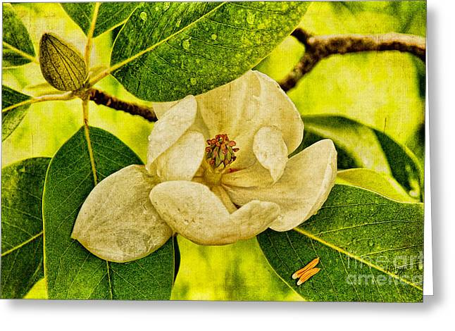 Sweet Bay Magnolia After The Rain Greeting Card by Lois Bryan
