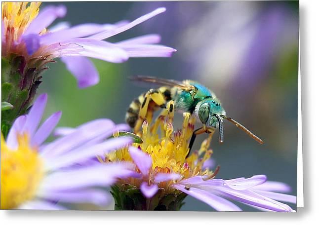 Sweet Bee Greeting Card