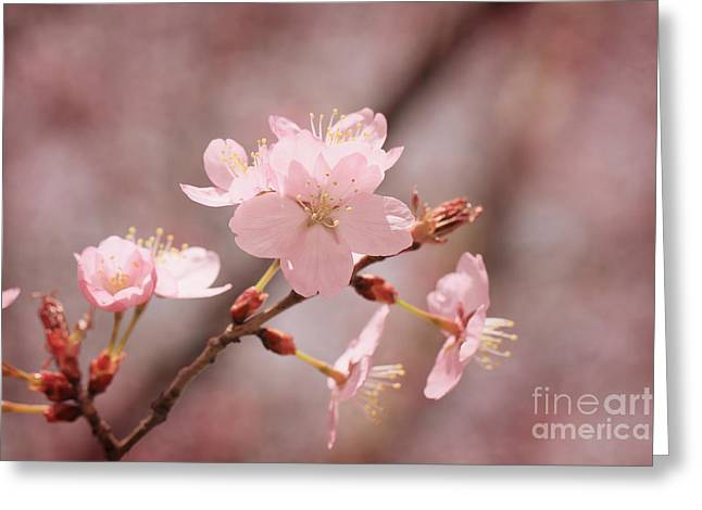 Sweet Blossom Greeting Card by LHJB Photography