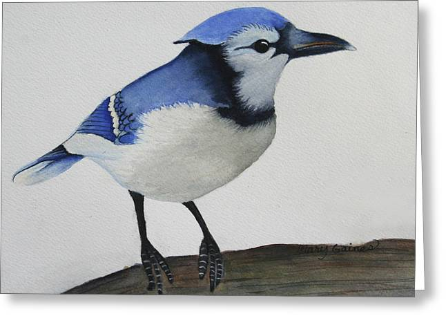 Sweet Blue Jay Greeting Card by Mary Gaines