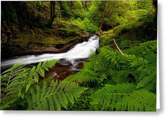 Sweet Creek Ferns Greeting Card