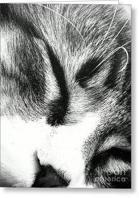 Greeting Card featuring the photograph Sweet Dreams by Jacqueline McReynolds