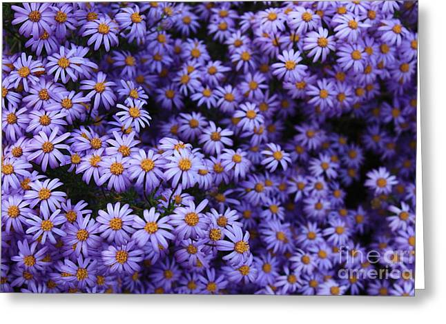 Sweet Dreams Of Purple Daisies Greeting Card by Carol Groenen
