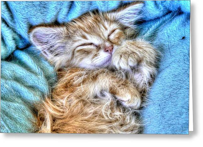 Sweet Dreams Tilly Greeting Card by Linda Rich