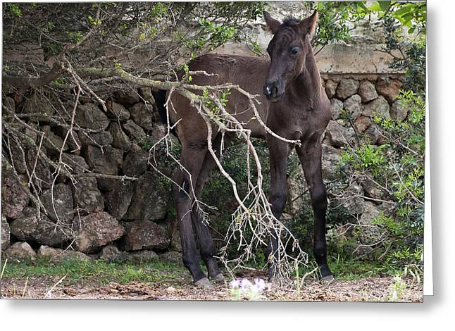 sweet heart - A tender foal wait his beloved mother  Greeting Card by Pedro Cardona