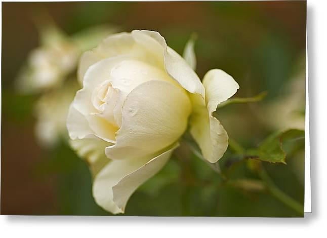 Sweet Home Rose Greeting Card by Nick  Boren