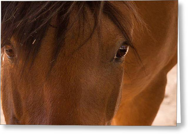 Sweet Horse Face Greeting Card