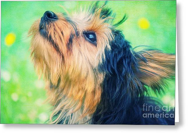 Sweet Little Dog Greeting Card by Angela Doelling AD DESIGN Photo and PhotoArt