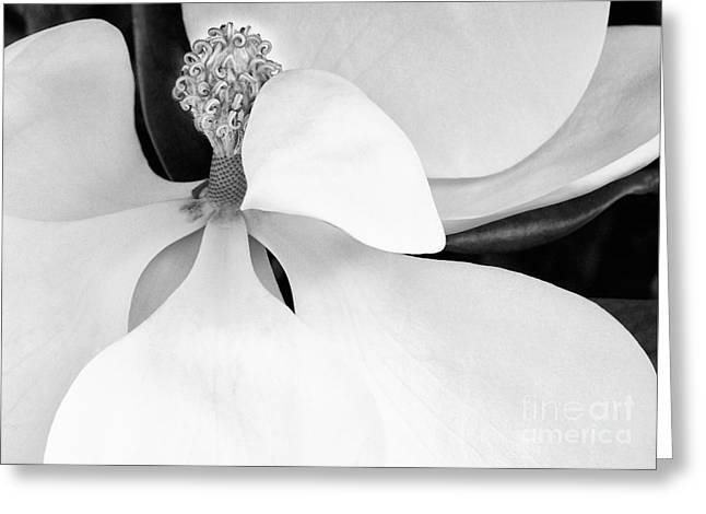 Sweet Magnolia Blossom Greeting Card by Sabrina L Ryan