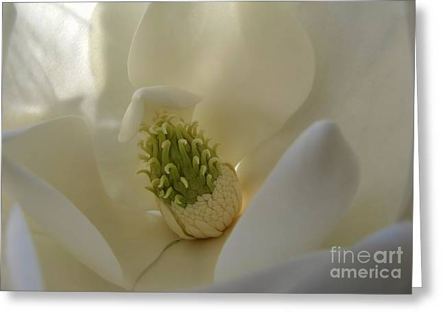 Sweet Magnolia Greeting Card by Peggy Hughes