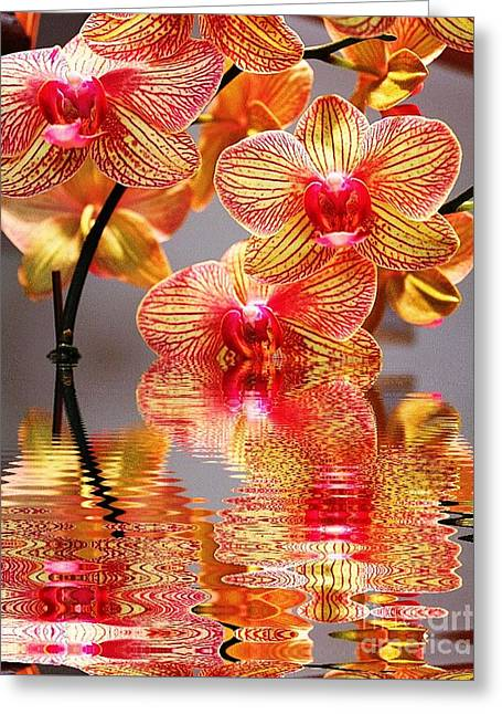 Sweet Orchid Reflection Greeting Card by Judy Palkimas