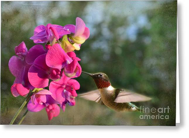 Sweet Pea Hummingbird Greeting Card by Debbie Portwood
