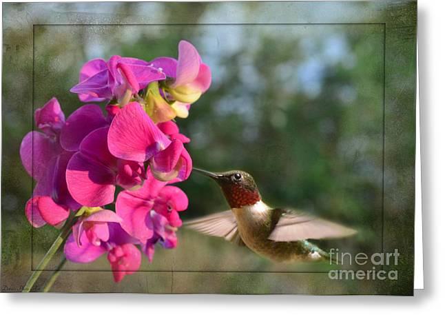 Sweet Pea Hummingbird II Greeting Card by Debbie Portwood