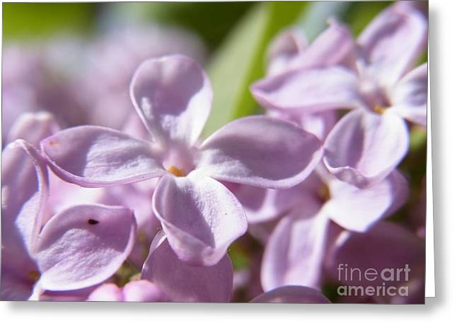 Greeting Card featuring the photograph Sweet Scent Of Spring by Agnieszka Ledwon