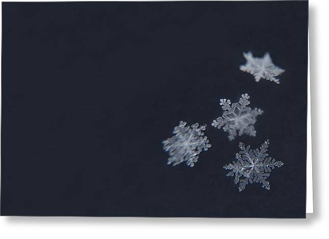 Sweet Snowflakes Greeting Card by Carrie Ann Grippo-Pike