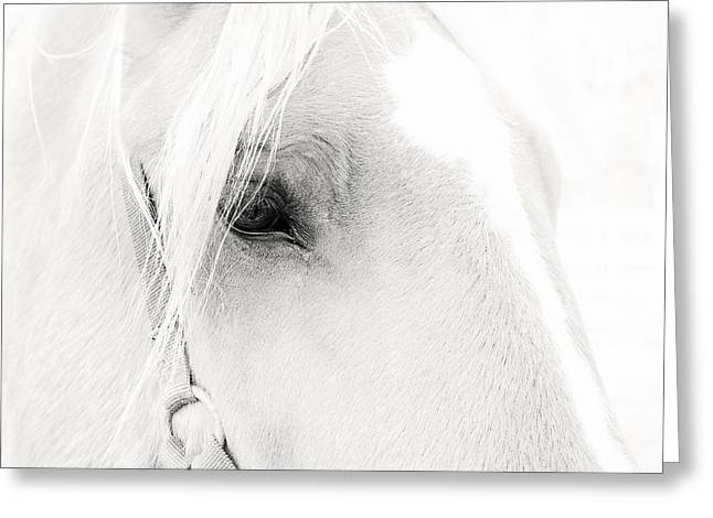 Sweet Soul Belgian Horse Black And White Greeting Card by Terry DeLuco