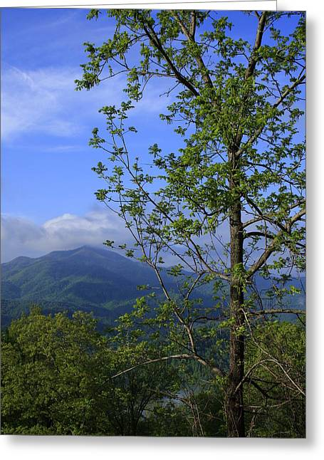 Sweet Springtime On The Blue Ridge Parkway Nc Greeting Card by Mountains to the Sea Photo