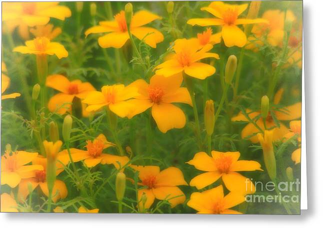 Sweet Summer Marigolds Greeting Card