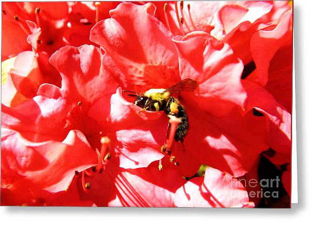 Greeting Card featuring the photograph Sweet Surrender by Robyn King
