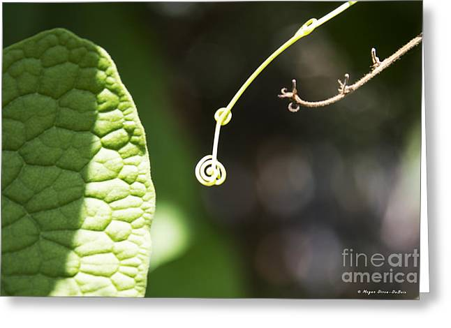 Sweet Tendril Greeting Card