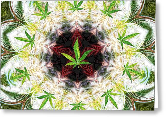 Sweetleaf Mandala Greeting Card