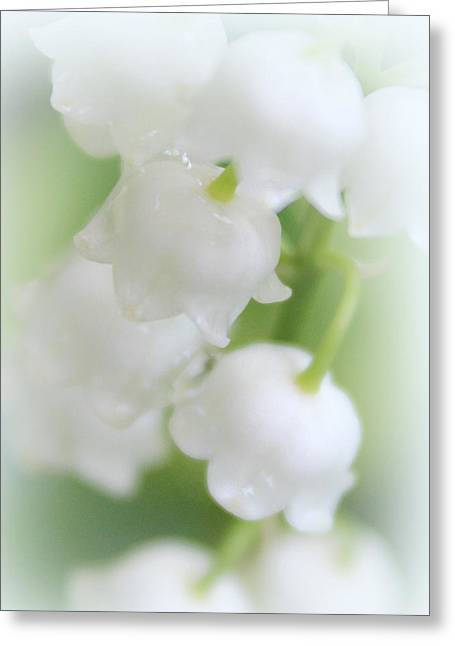 Sweetly Scented Greeting Card by The Art Of Marilyn Ridoutt-Greene