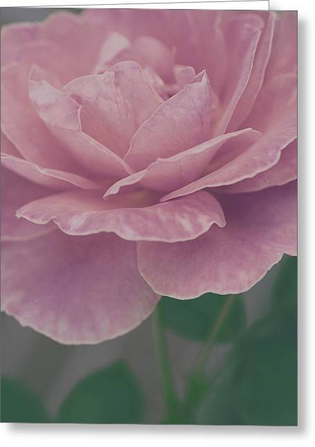 Sweetly Greeting Card by The Art Of Marilyn Ridoutt-Greene