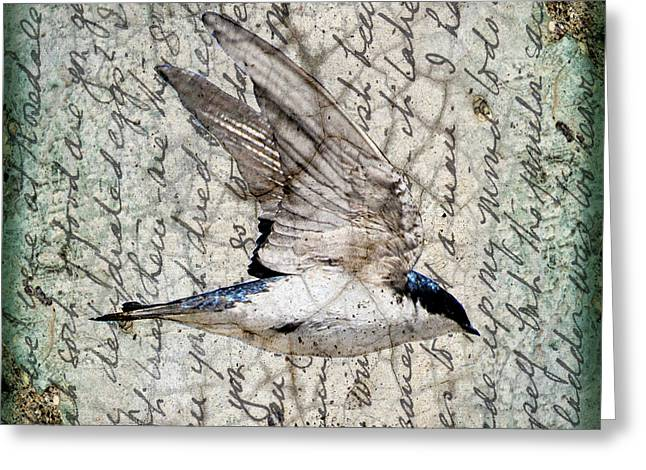 Swift Wings Greeting Card by Judy Wood