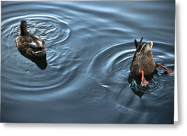 Swim And Take The Plunge Greeting Card by Allan Millora