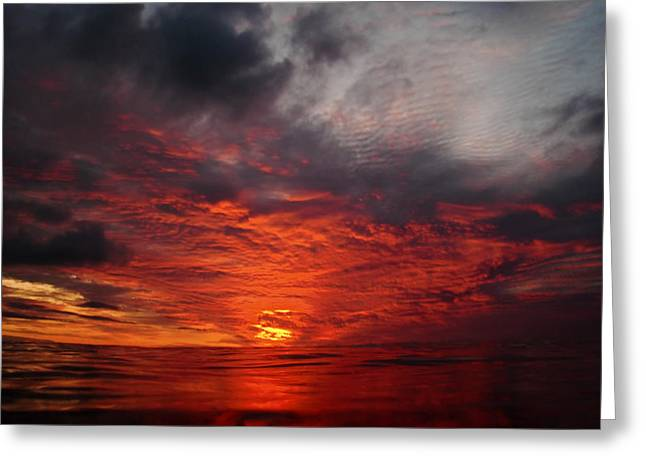 Swimmers Sunset Greeting Card by Tony Reddington