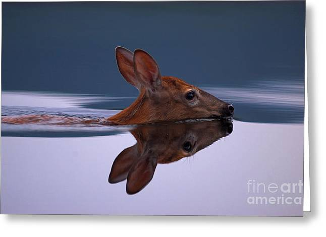 Swimming Fawn Greeting Card by Jane Axman