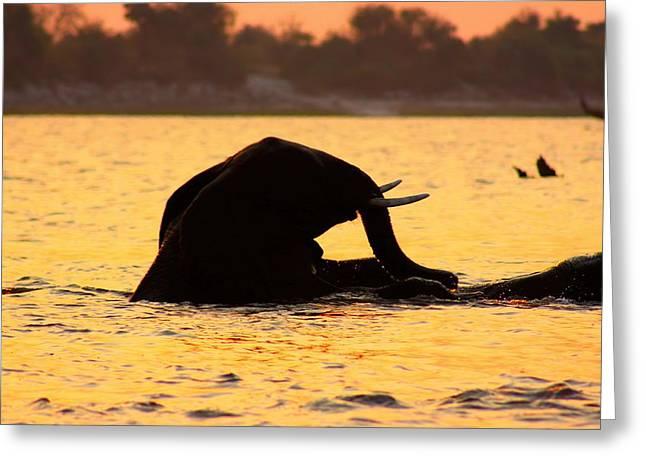 Greeting Card featuring the photograph Swimming Kalahari Elephants by Amanda Stadther