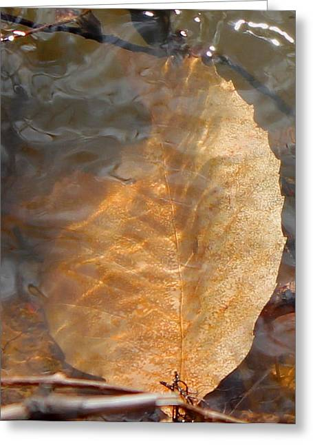 Greeting Card featuring the photograph Swimming Leaf by Candice Trimble