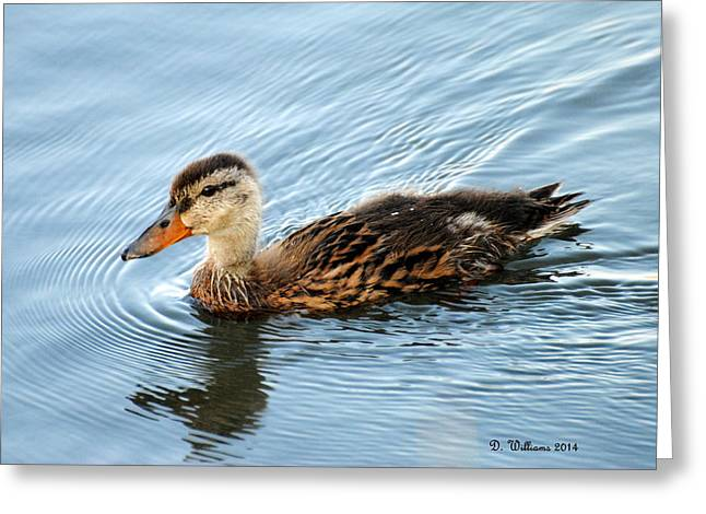 Swimming Mallard Hen Greeting Card