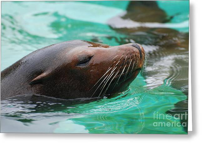 Swimming Sea Lion Greeting Card by DejaVu Designs