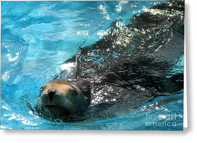 Greeting Card featuring the photograph Swimming Sea Lion by Kristine Merc