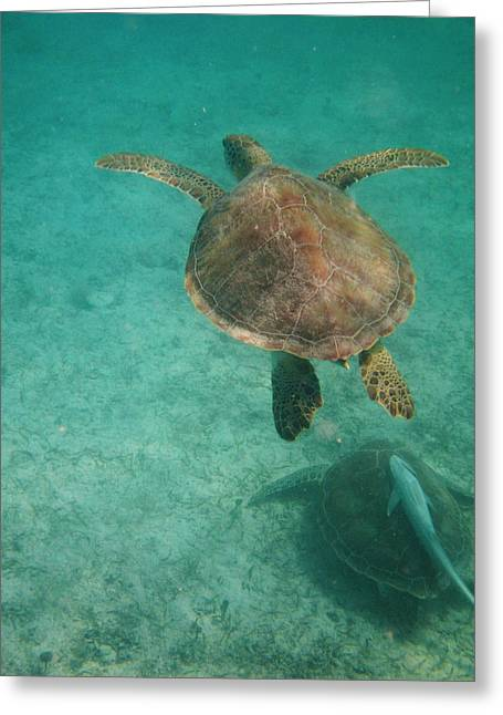 Swimming With Turtles Greeting Card by Heather Green
