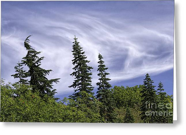 Swirling Clouds Crooked Trees Greeting Card
