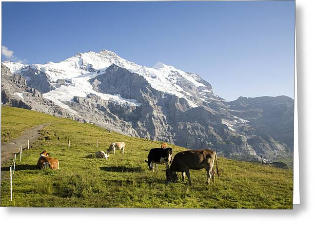 Switzerland, Canton Bern, Berner Greeting Card by Tips Images