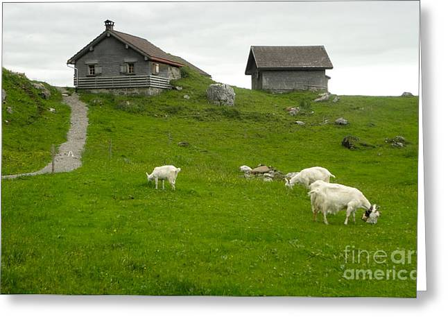 Switzerland Greeting Card by Gregory Dyer