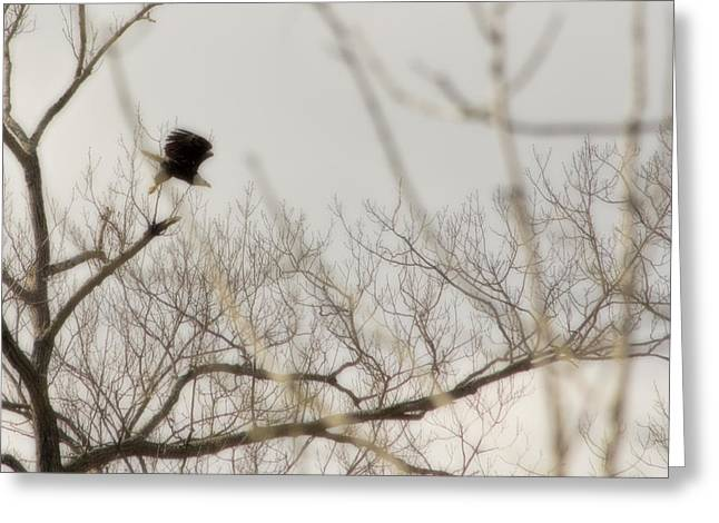 Swooping Eagle Above Potomac River Greeting Card