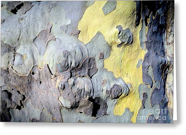 Sycamore Camouflage Greeting Card