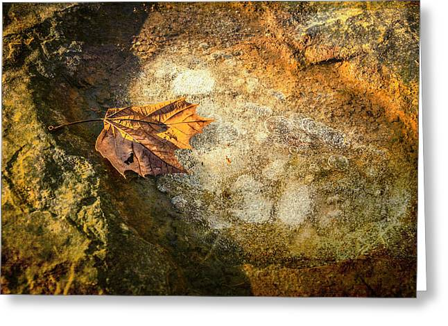 Sycamore Leaf In Ice Greeting Card