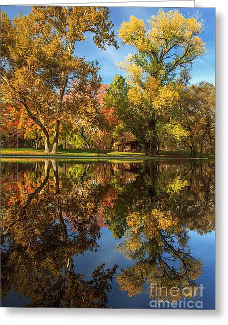 Sycamore Pool Reflections Greeting Card by James Eddy